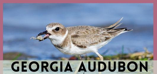 Georgia Audubon + Wild Cumberland